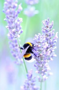 Bumble Bee - Creation of Life, Medicine Woman & Original Life Water — A QHHT Session by Laron